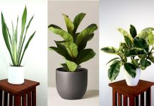 best air purifying indoor plants to get a breath of fresh air